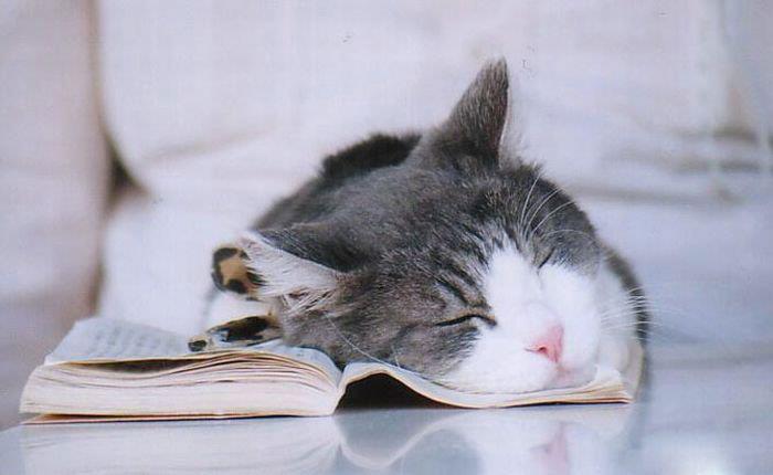 סופר צללים יעזור לי להגשים חלום של כתיבת ספר